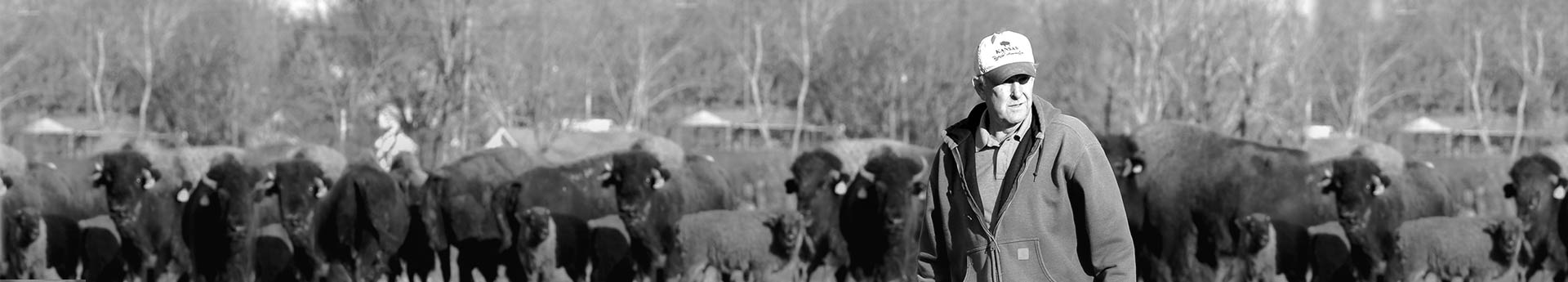 Bob of Bluegrass Bison in Shelbyville, Kentucky. Trusted Bison Supplier.